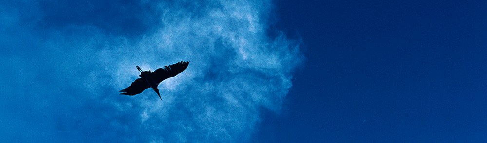 bird silloute against sky.png