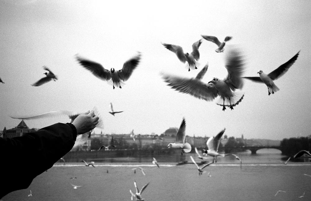 Birds_DresdenGR.jpg