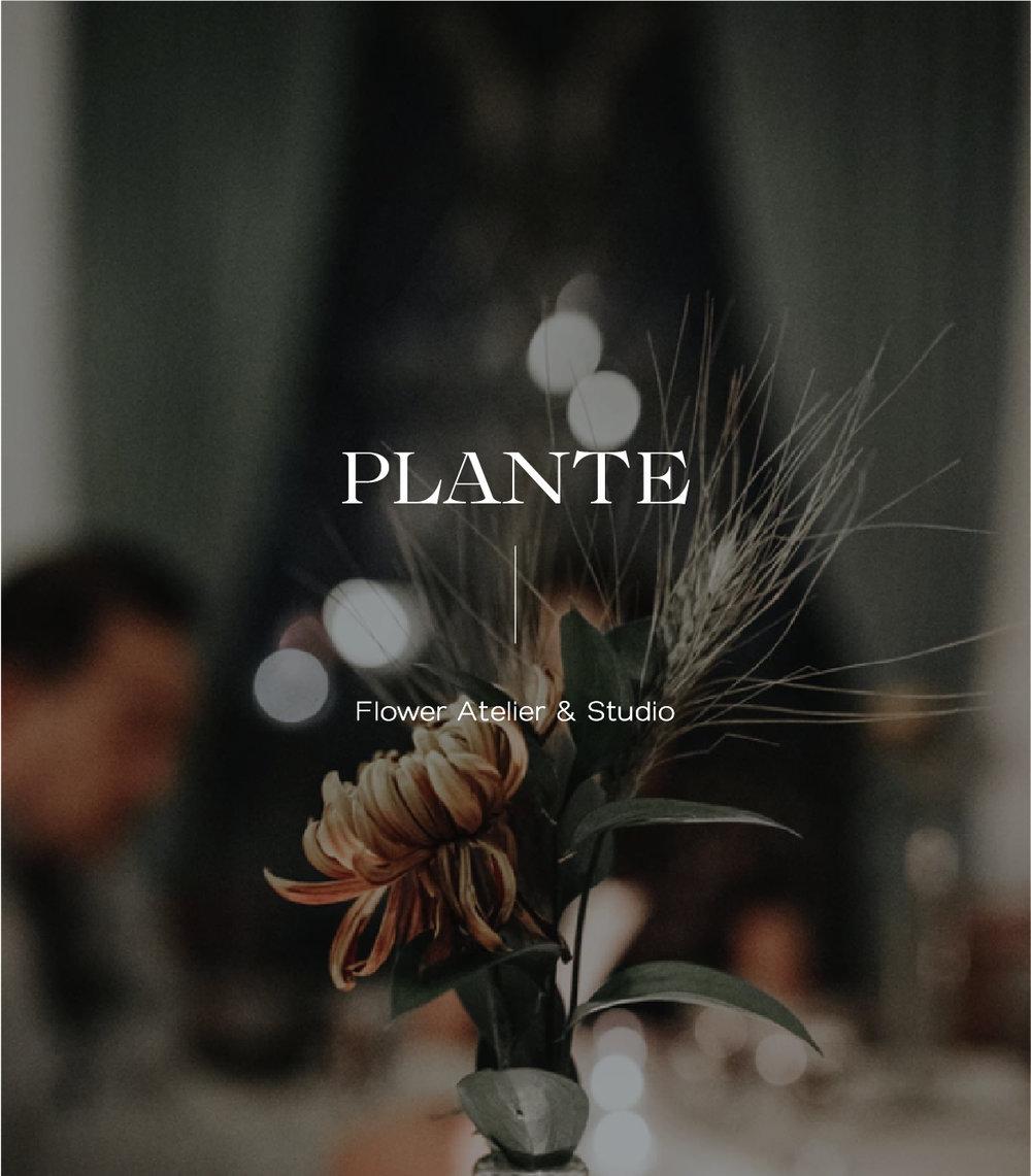 PLANTE CONCEPT BRANDING