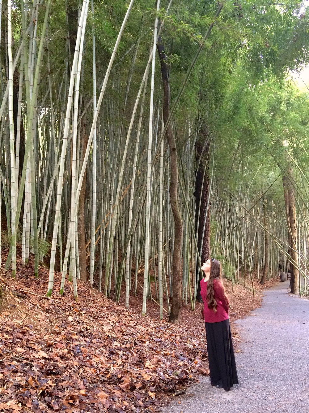 bamboo-forest-1.jpg
