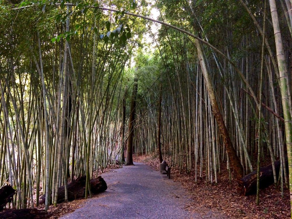 bamboo-forest-3.jpg