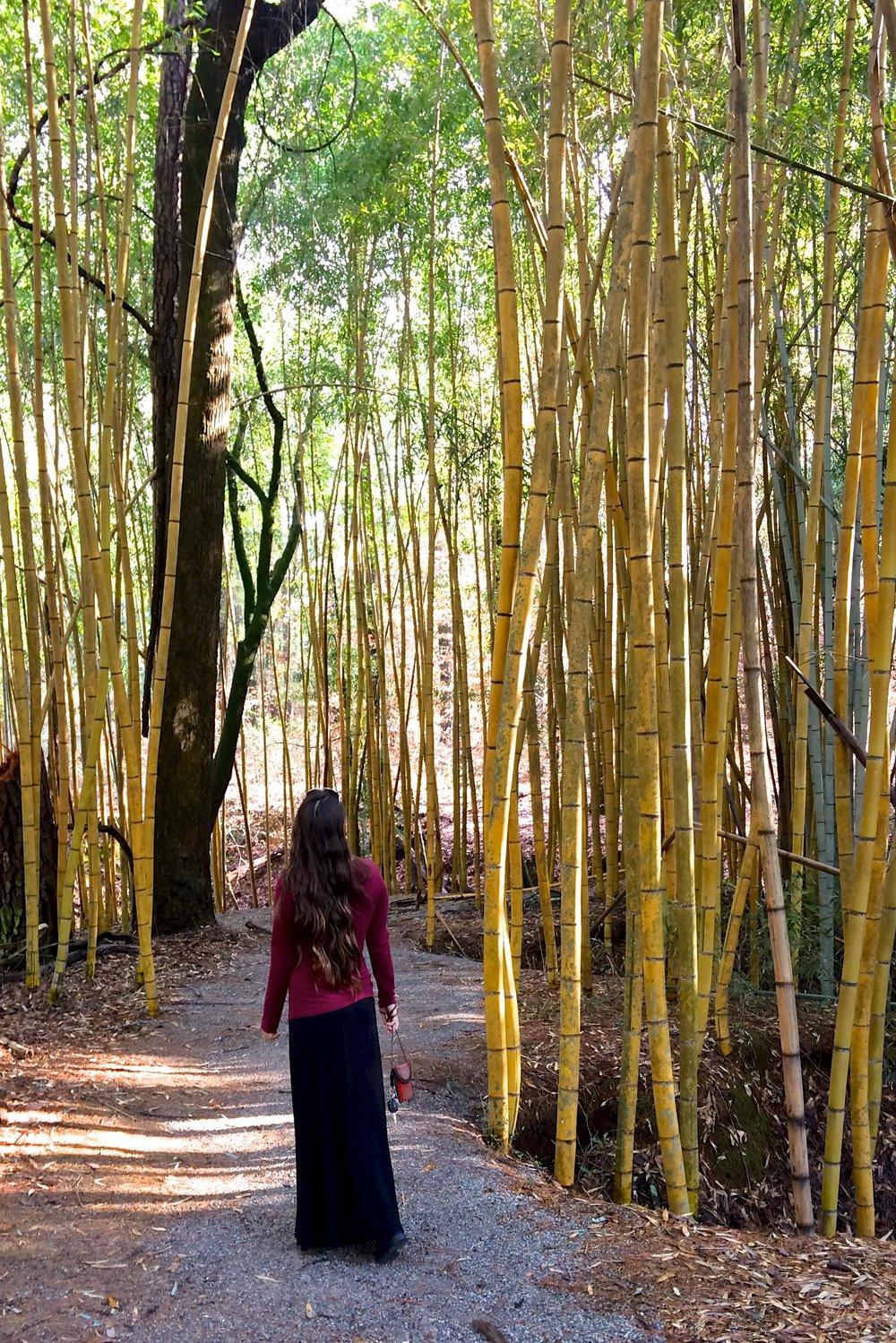 bamboo-forest-4.jpg