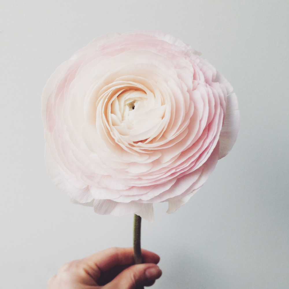 Flowerlover - Studioacco.be