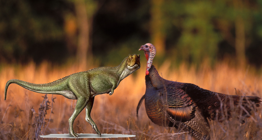 turkey Dino courstesy of Christineren @ wordpress
