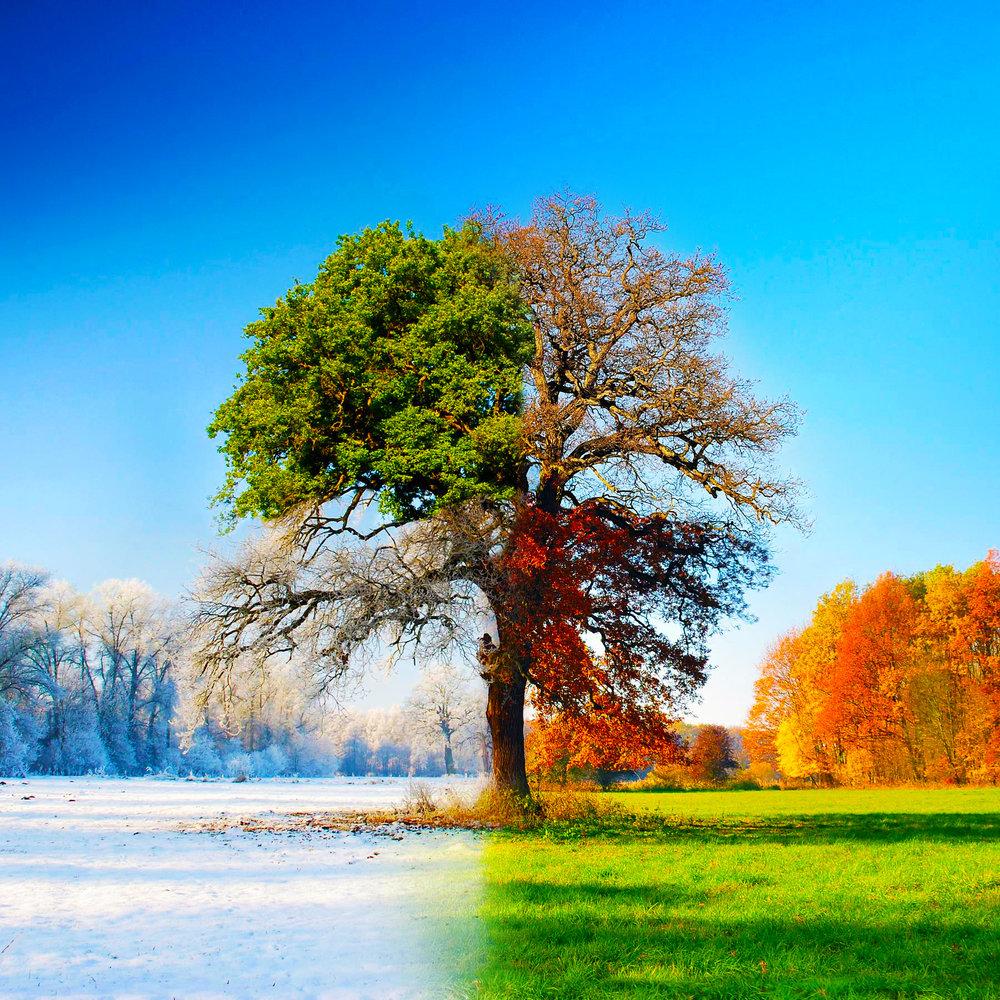 "Episode 176: ""Fall In""<a href=""http://www.strideandsaunter.com/new-blog/2017/12/17/episode-176-fall-in"">Listen →</a></p>"