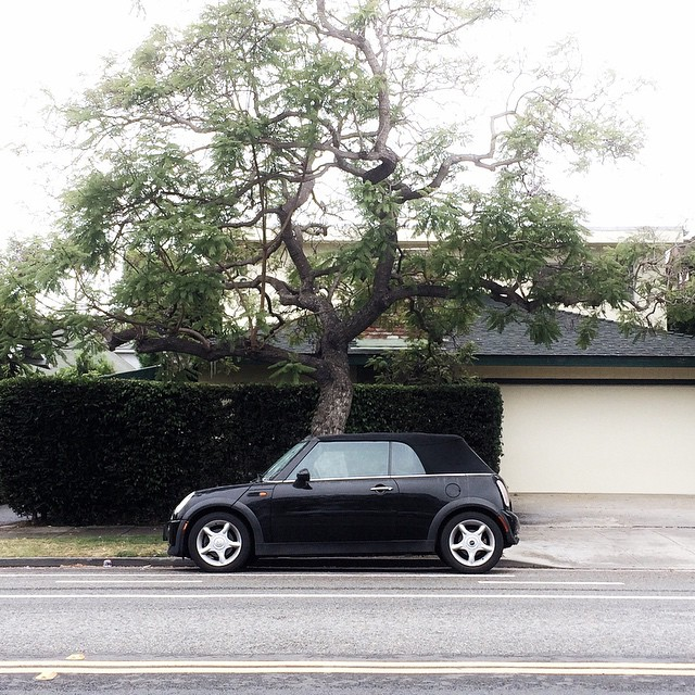 Looks like @mini sprouted a tree. Quatre.