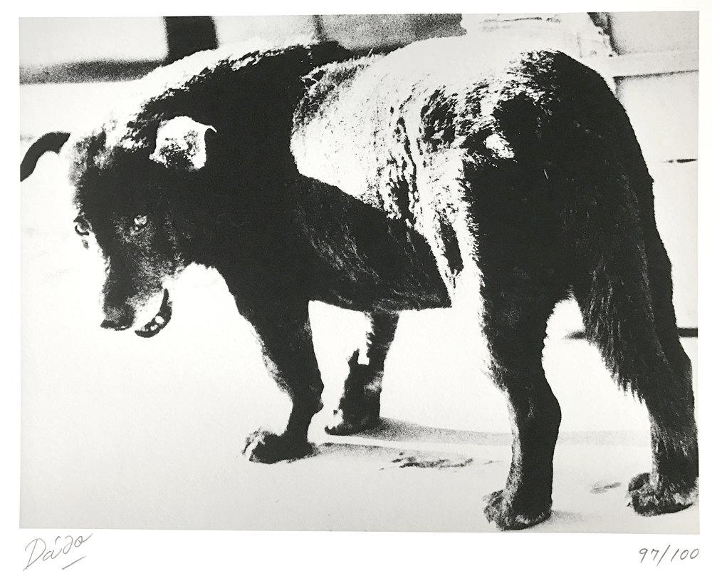 Daido Moriyama, 1971