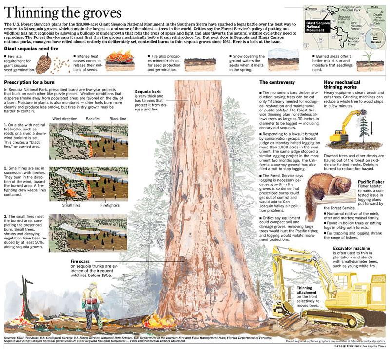 me-sequoia15.jpg