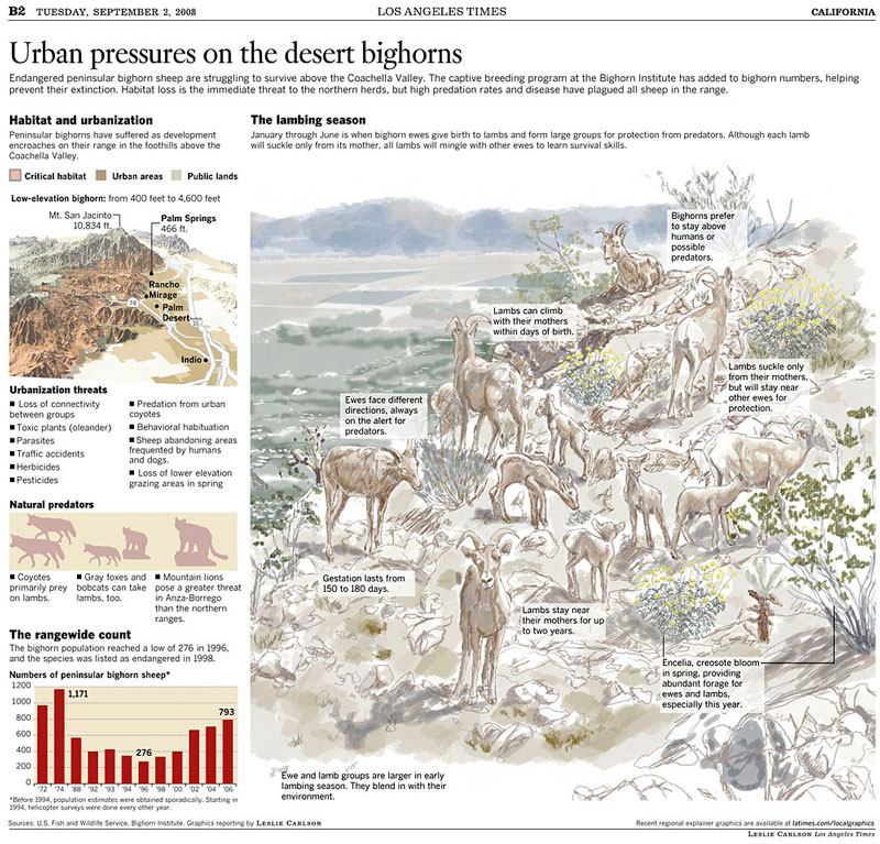 Urban pressures on the desert bighorns