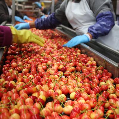 Fruit Sorting Five.jpg