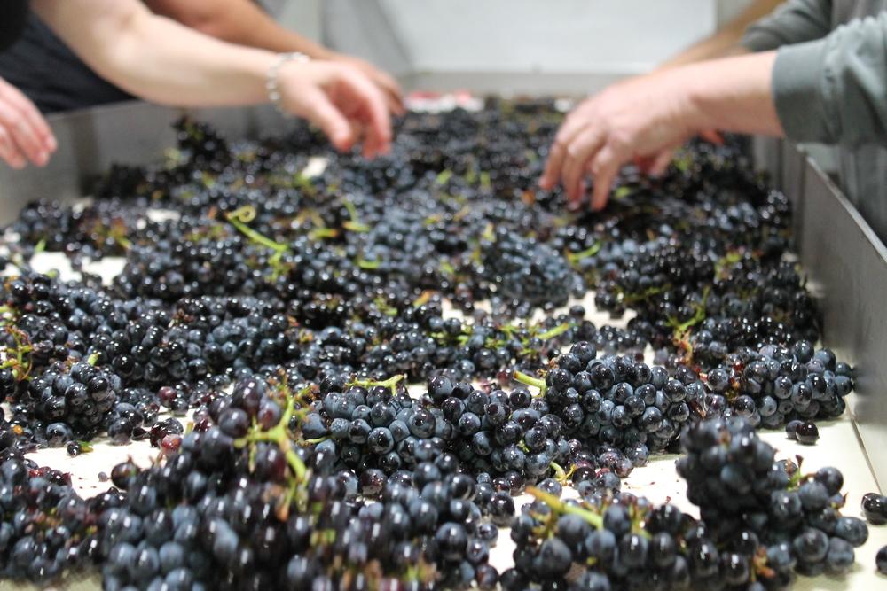 Fruit Sorting Four.jpg