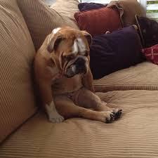 ashamed pup