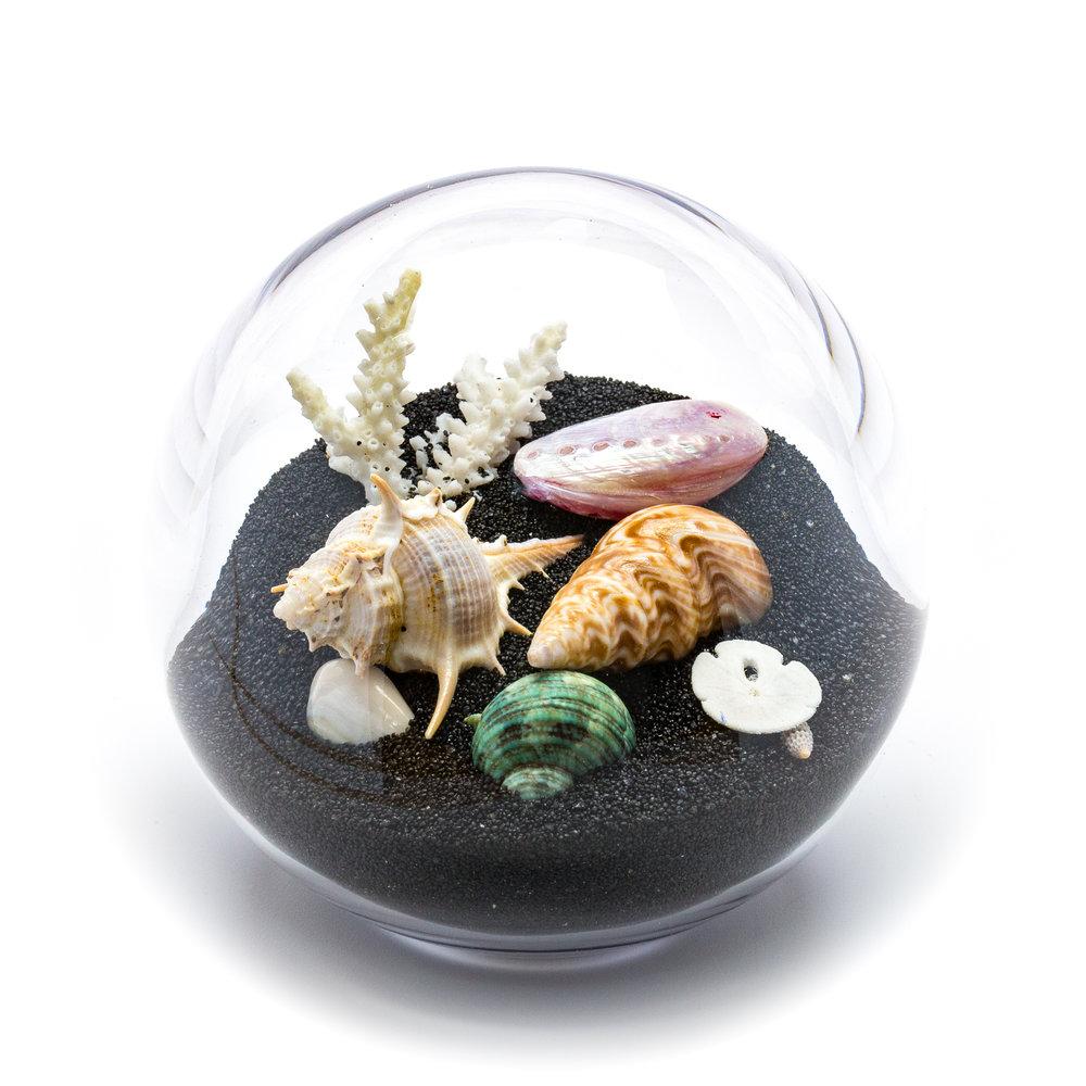4 sand & shells black-100 (2).jpg