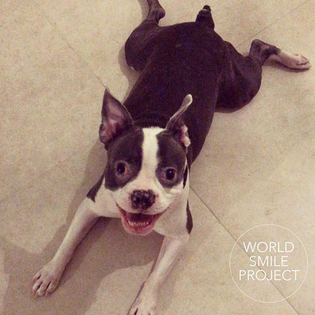 Our puppy friend @mia_theblueboston  #iSmileFor @fundacion_curame to help children afford surgery to life a better life.