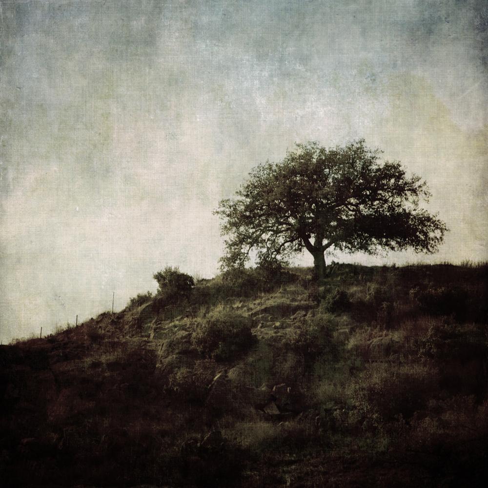 Lonesome by Tamara Lee