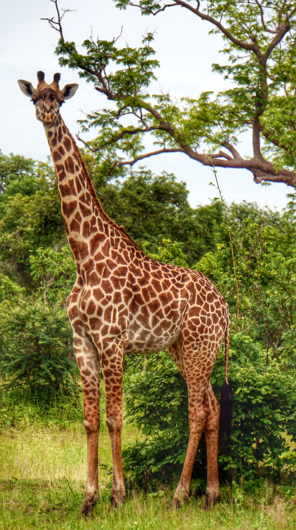 Would I get to see giraffe on my overland trip? I hoped so.