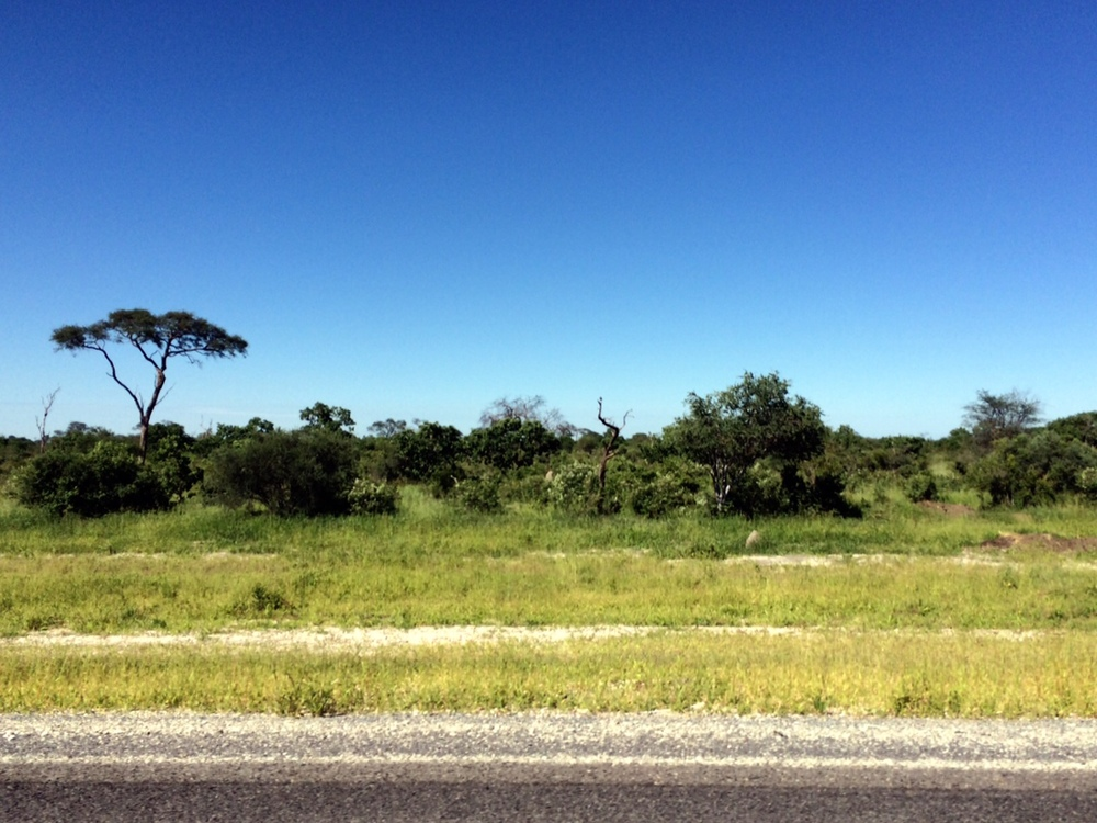 Botswana is very flat...for many kilometers we saw nothing but road, brush and the occasional acacia tree.