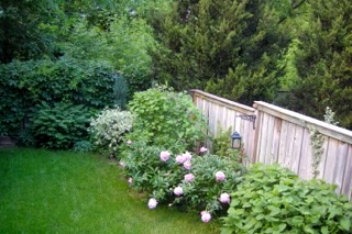 backyard 300 Withrow.jpg