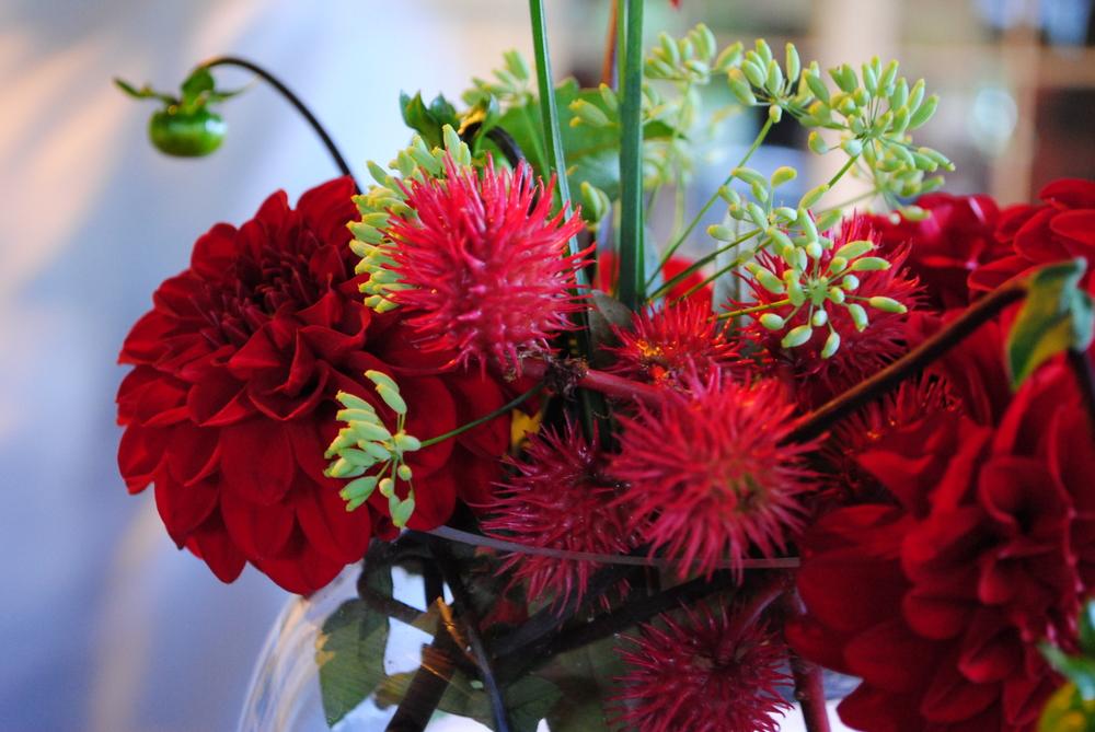 maura's flowers