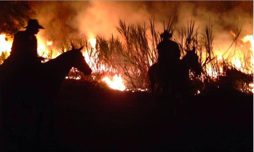 Port Douglas - The Grotto - Cane fire