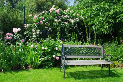 Garden and bench