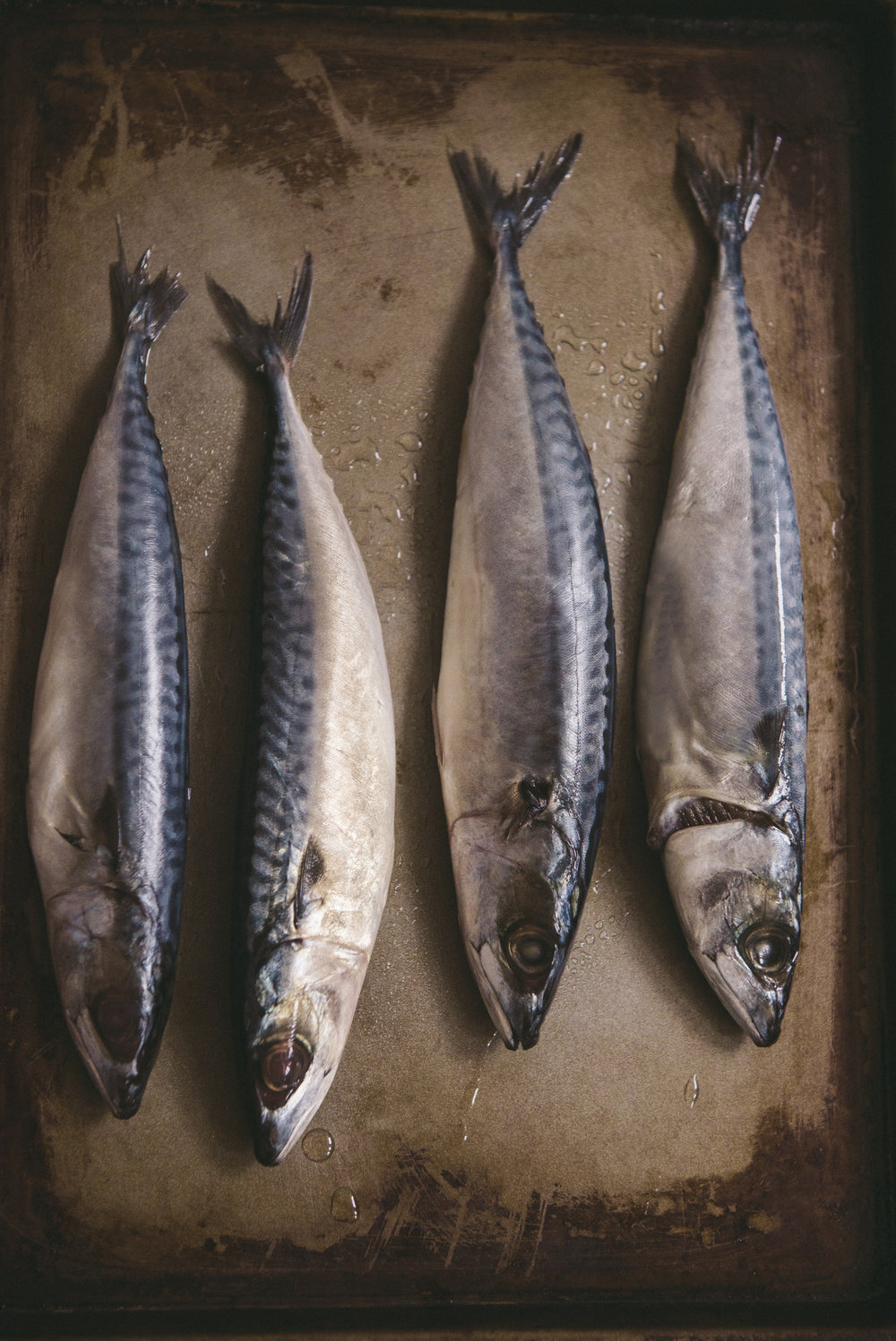 raw mackerel.JPG