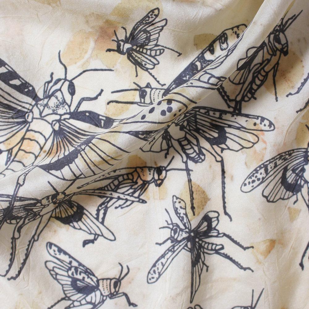 jlb_grasshopper_euc_det 2 crop.jpg
