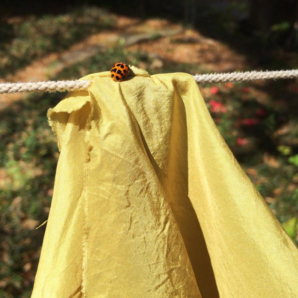 jbourgeois_grasshopper process03.jpg