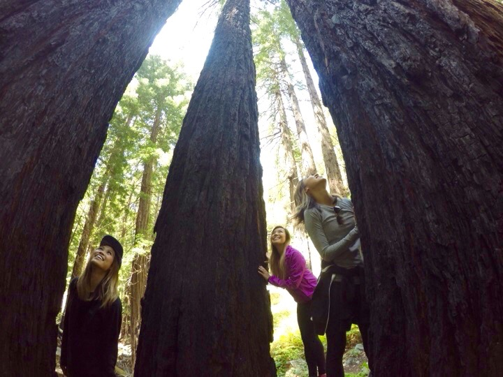 The redwoods were so GIANT!