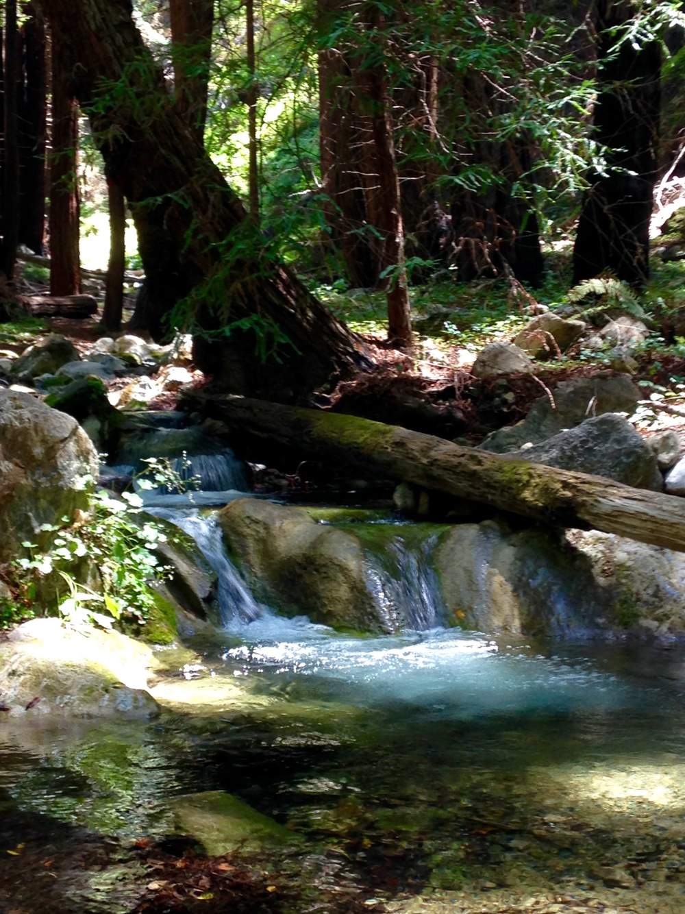 We camped at Lime Kiln State Park which had the loveliest little streams running through it!