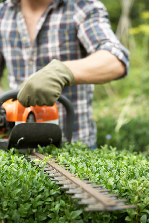 man-trimming-hedge-PKFGRJK.jpg