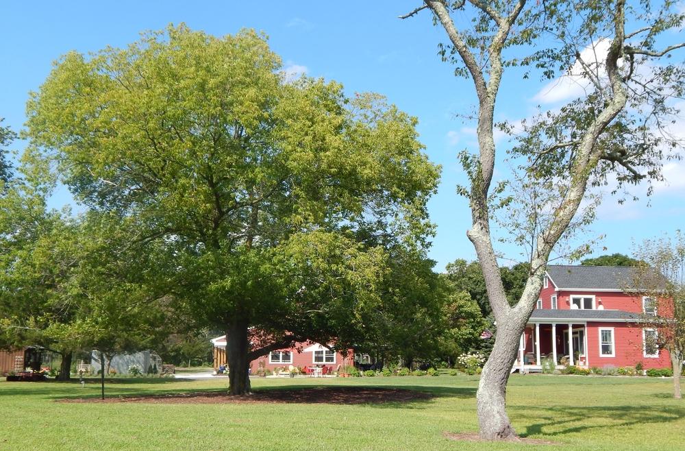 Renovated Farm House + Farm Shed