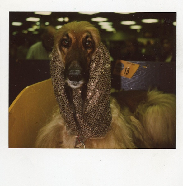Westminster Kennel Club dog show, before my major allergy attack Late 90s