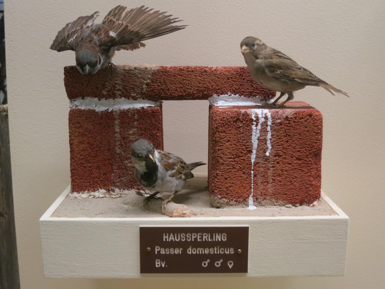 Naturhistorisches Museum Wien 4.14.13