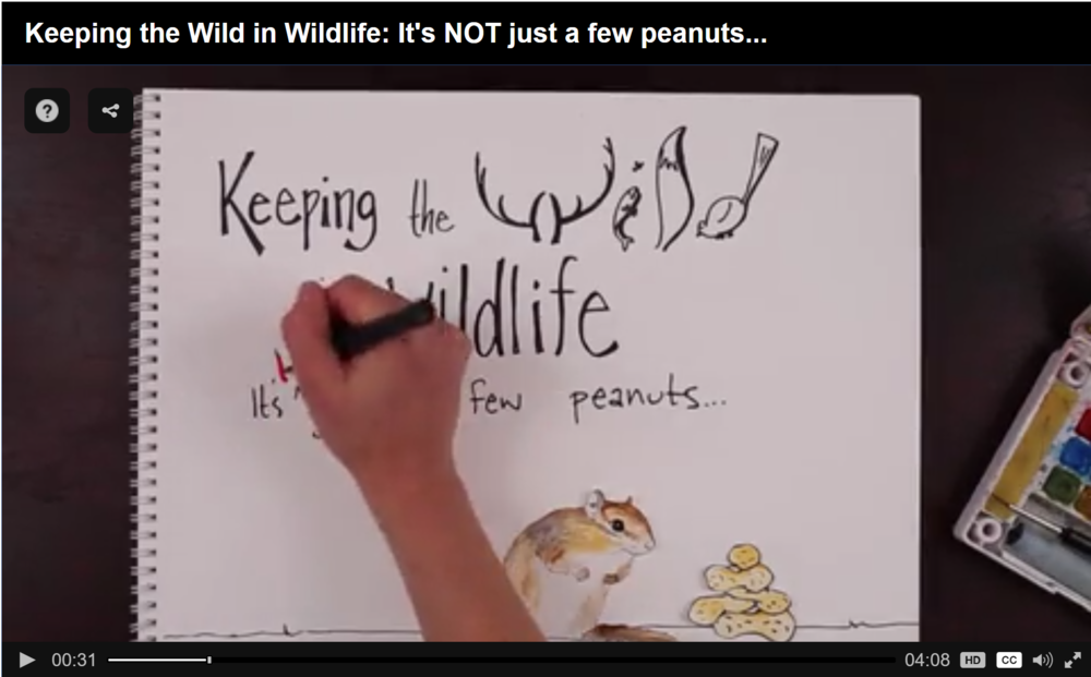 Keeping the Wild in Wildlife.PNG