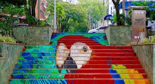 medellin parrot.jpg