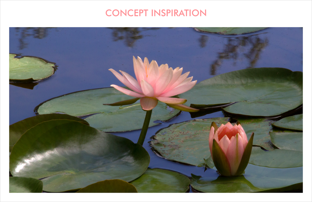 the timeless appeal of a lotus pond, complete with its resplendent grandeur of the full lotus in bloom, solo buds, and leaves create a landscape of zen-like beauty. The softness in contours of the leaves and buds and coral color are retained.