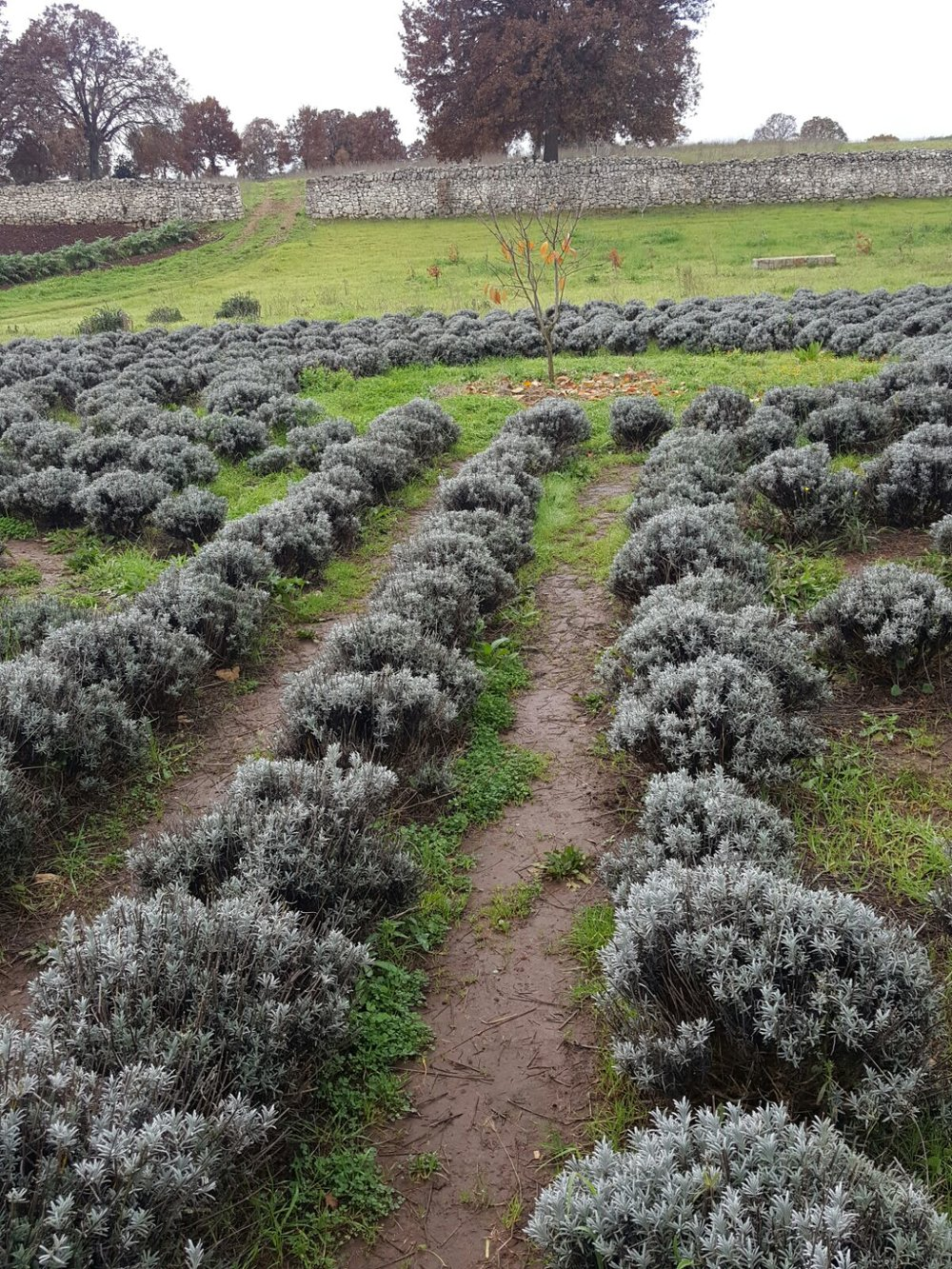 Giardini di Pomona