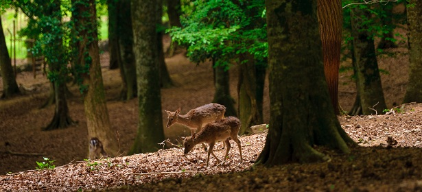 foresta3.jpg