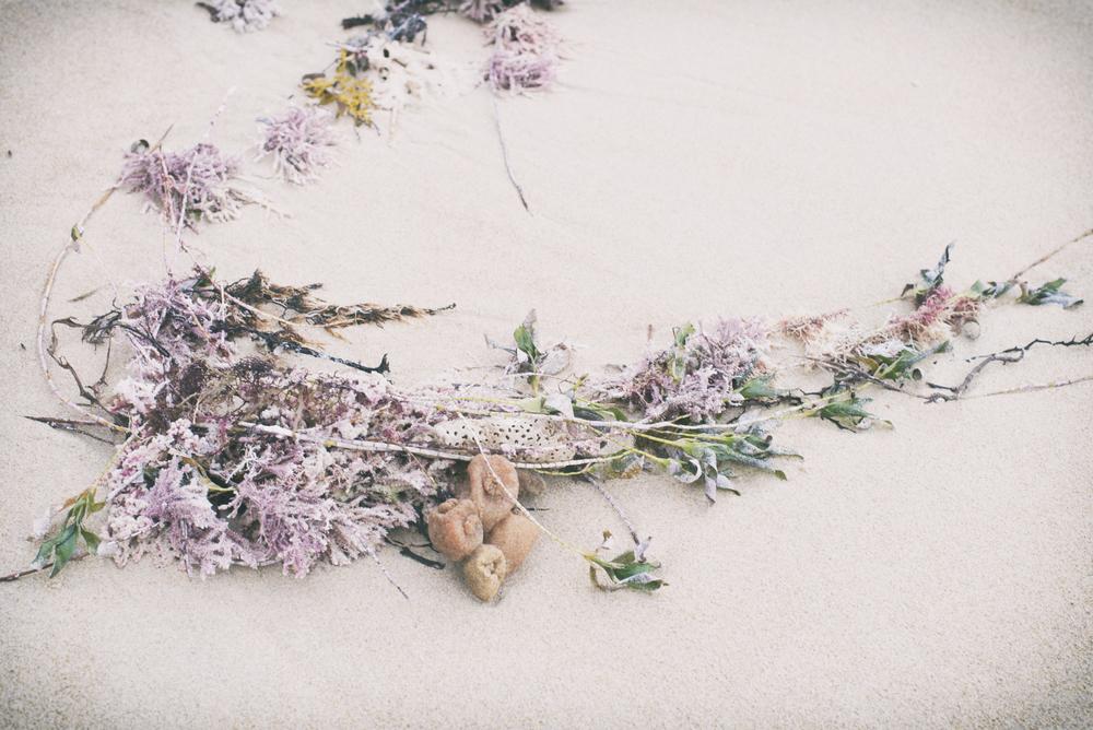 Seaweed-2a1.jpg