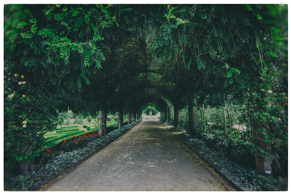 Wisteria Archway