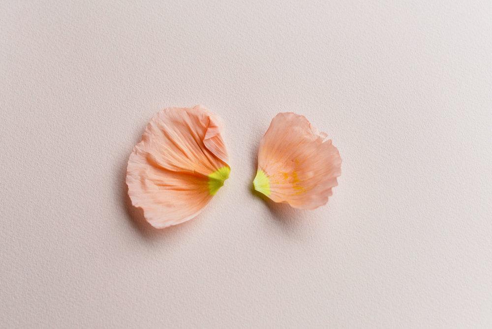 pink-poppy-petals.jpg
