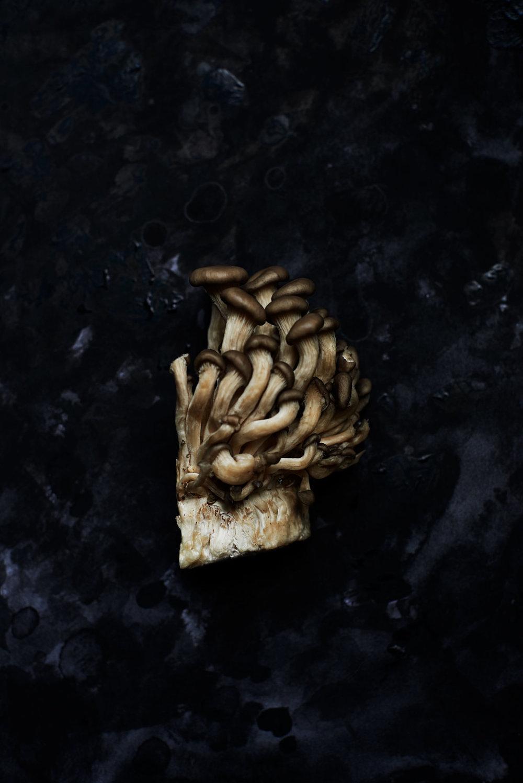 mushroom-cluster.jpg