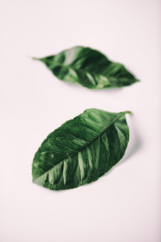 lemon leaves