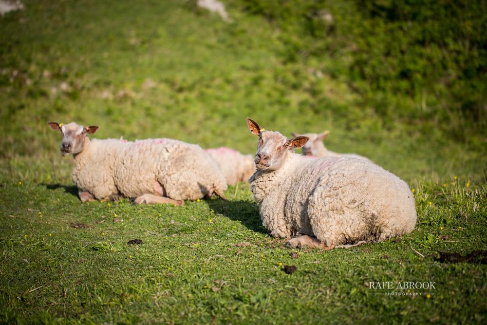 kerry & will engagement shoot totternhoe knolls dunstable bedfordshire-1012.jpg