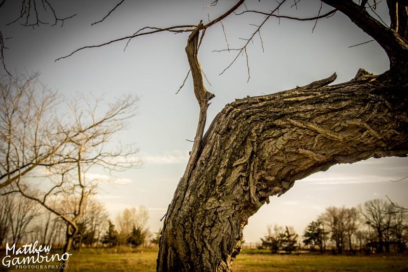 2015Nature_Matthew_Gambino_Photography5.jpg