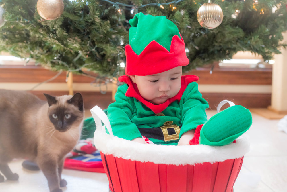Holiday_Pictures_Matthew_Gambino_Photography16.jpg