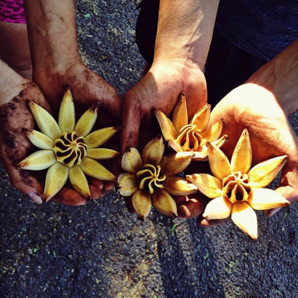 flowers oahu.jpg