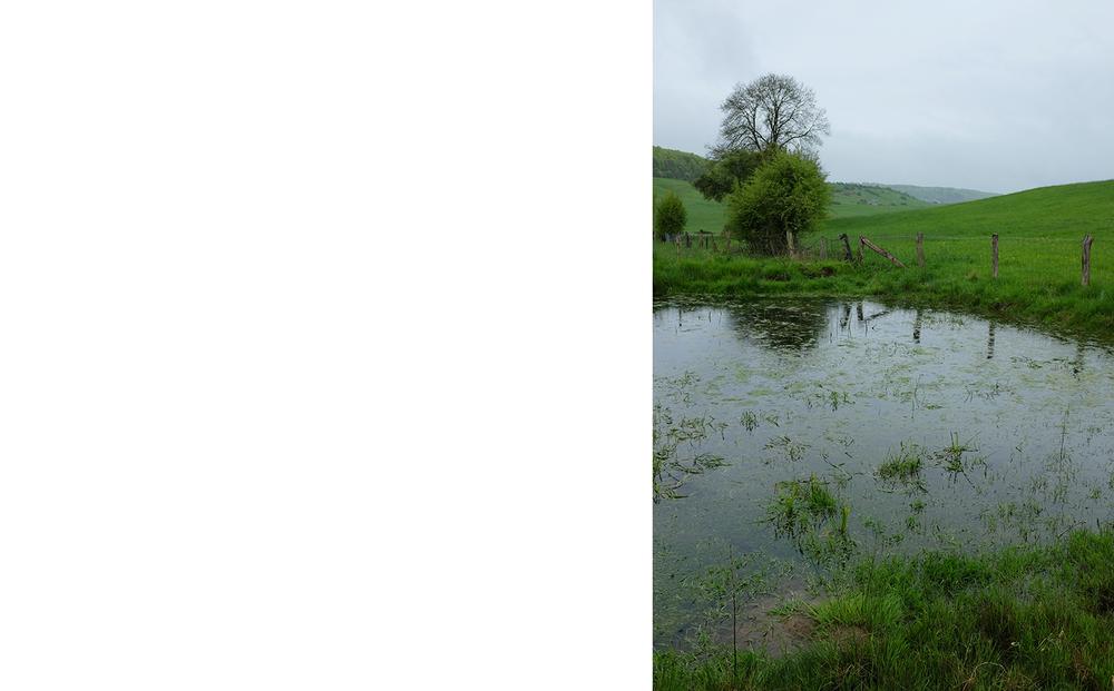 Pond Heckefeld