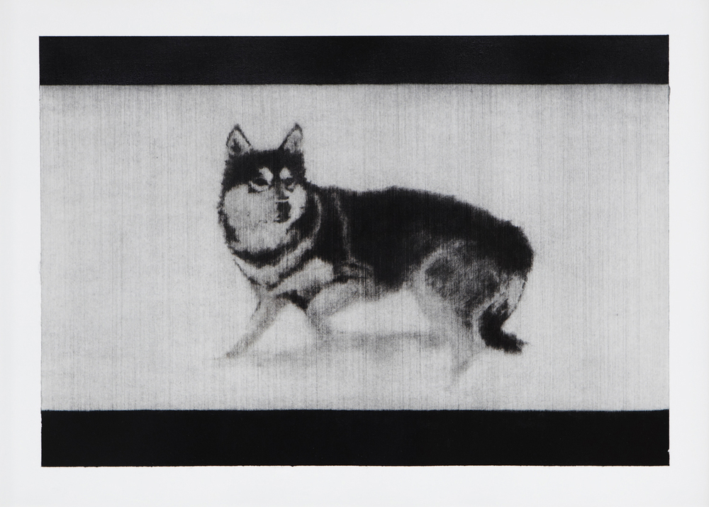 Hund . 2012. Charcoal on paper. 35 x 48cm.